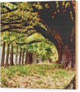 Autumn Shelter Wood Print
