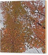 Autumn Sky Through Trees Wood Print