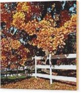 Autumn Splendor 10 Wood Print