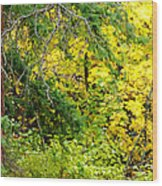 Autumn Splendor 14  Wood Print