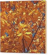 Autumn Splendor 15 Wood Print