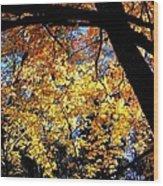 Autumn Splendor 3 Wood Print