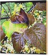 Autumn Splendor 4 Wood Print