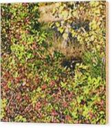 Autumn Splendor 7 Wood Print