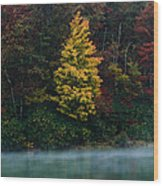 Autumn Splendor Wood Print by Shane Holsclaw