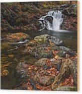 Autumn Streams In Tamworth Wood Print