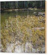 Autumn Sun On Mountain Pond Wood Print