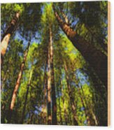 Autumn Sunlight Cast On Majestic Green Oregon Old Growth Forest  Wood Print