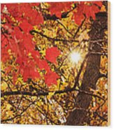 Autumn Sunrise Painterly Wood Print