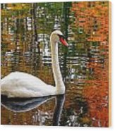 Autumn Swan Wood Print