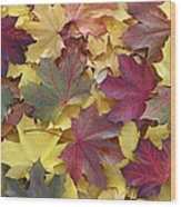 Autumn Sycamore Leaves Germany Wood Print