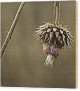 Autumn Thistle Wood Print