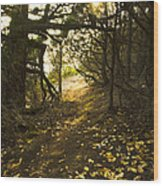 Autumn Trail In Woods Wood Print