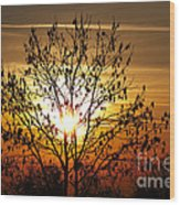 Autumn Tree In The Sunset Wood Print