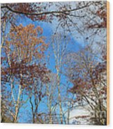 Autumn Trees And Heaven Wood Print