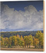 Autumn Trees In A Row Wood Print