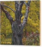 Autumn Trees3 Wood Print