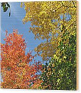 Autumn Treetops Wood Print