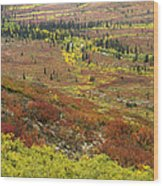 Autumn Tundra With Boreal Forest Wood Print