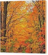 Autumn Tunnel Of Trees Wood Print