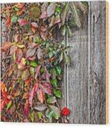 Autumn Vine Wood Print