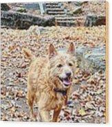 Autumn Walk Wood Print by Bob Jackson