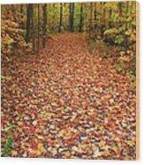 Autumn Walk In Ohio Wood Print