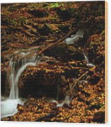 Autumn Washed Away Wood Print