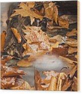 Autumn Water Eddy Wood Print