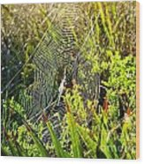 Autumn Web Wood Print