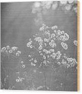 Autumn Weeds Wood Print