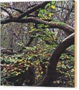 Autumn Wild Nature Denmark Wood Print