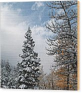 Autumn Winter Colors 2 Wood Print