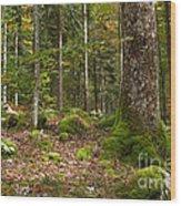 Autumn Woodland Wood Print