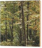Autumn Woods II Wood Print