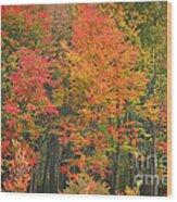 Autumn Woods Wood Print