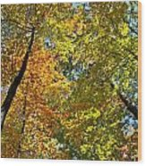 Autumn Woods Sky View Wood Print
