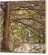 Autumnal Colors In The Summer Time. De Haar Castle Park Wood Print