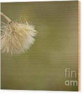 Autumnal Dandelion Fluff Wood Print
