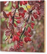 Autumnal Little Wonders_2 Wood Print by Halyna  Yarova