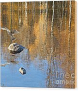 Autumnal Reflections Wood Print