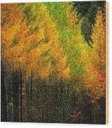 Autumnal Road Wood Print
