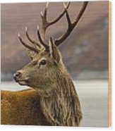 Autumnal Stag Wood Print