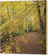 Autumnal Woodland II Wood Print