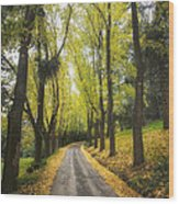 Autumns Day Wood Print