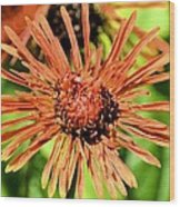 Autumn's Gerber Daisy Wood Print