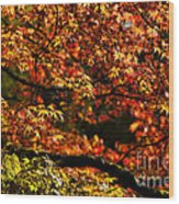 Autumn's Glory Wood Print by Anne Gilbert