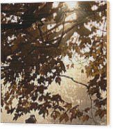 Autumns Golden Morning Wood Print