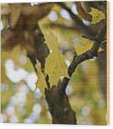 Autumn's Wondrous Colors 1 Wood Print