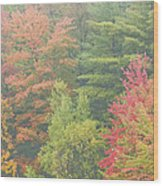 Autumntrees And Fog Wood Print
